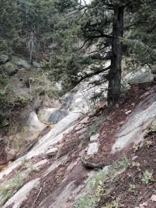 Streamside Trail Skunk Canyon